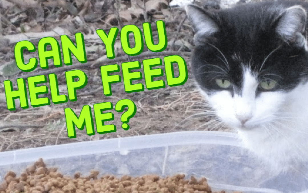 Feral Cat Colony Caretakers – The Unsung Heroes of Rescue