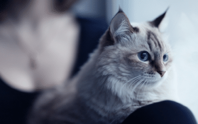 Why Our Family Provides Respite Foster Care for Rescue Cats