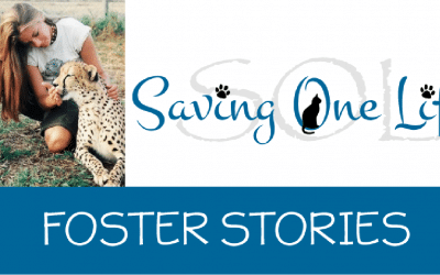 I Could Never Foster; I Would Never Give Them Up! – Part Two