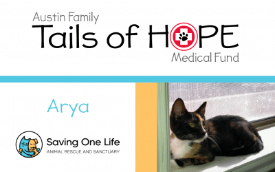 Arya's Story – Tails of HOPE