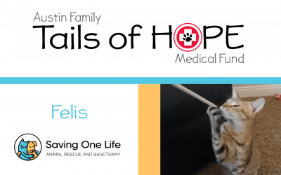 Felis' Story – Tails of HOPE